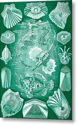 Collection Of Teleostei Metal Print by Ernst Haeckel