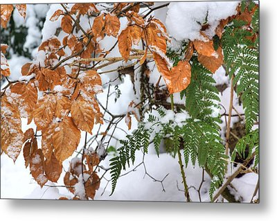Color In The Snow Metal Print by David Birchall