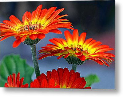 Color Me Happy......... Metal Print