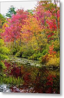 Metal Print featuring the photograph Color On The Water by Mike Ste Marie