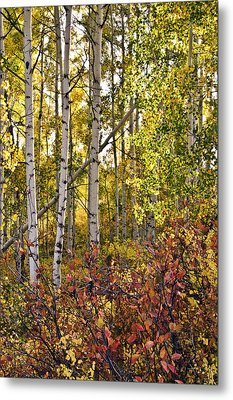 Metal Print featuring the photograph Colorado Changing Eight    by Eric Rundle