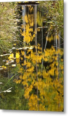 Metal Print featuring the photograph Colorado Changing Five  by Eric Rundle