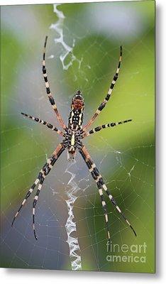 Colorful Spider Metal Print