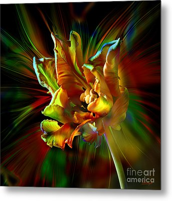 Colorfull Tulip Metal Print by Johnny Hildingsson