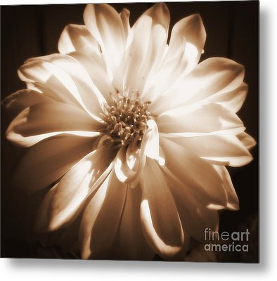 Come Closer Metal Print by Patti Whitten