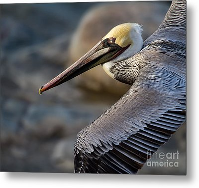 Metal Print featuring the photograph Coming Through by Dale Nelson