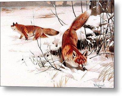 Common Fox In The Snow Metal Print by Friedrich Wilhelm Kuhnert