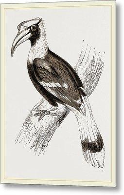 Concav Hornbill Metal Print by Litz Collection