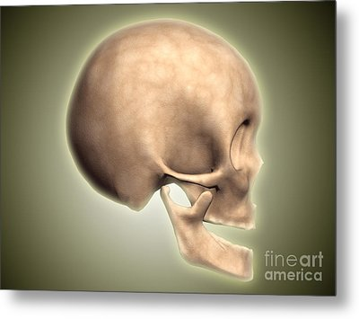Conceptual Image Of Human Skull, Side Metal Print by Stocktrek Images