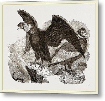 Condors Metal Print