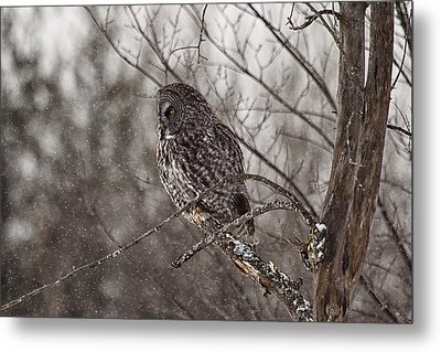 Contemplating Winter Metal Print