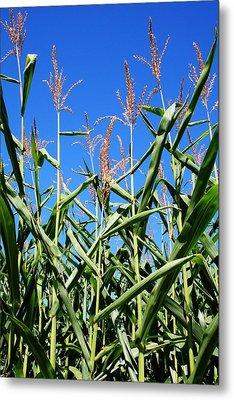 Corn Field Rural America Metal Print by Heather Allen