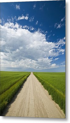 Country Road Through Grain Fields Metal Print by Dave Reede