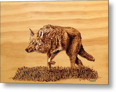 Coyote Metal Print by Ron Haist