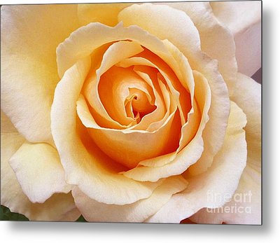 Creamy Orange Rose Blossom Metal Print