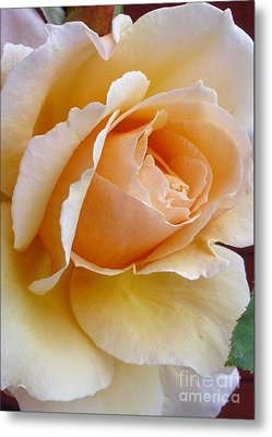 Creamy Pastel Orange Rose Metal Print