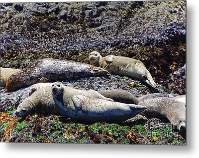 Creatures Comfortable Metal Print by Adria Trail