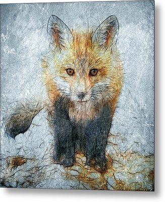 Curious Fox Metal Print by Steve Barge