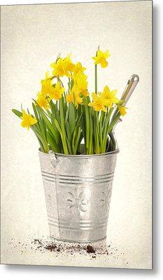 Daffodils Metal Print by Amanda Elwell