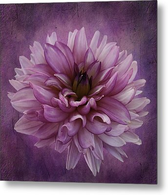 Dahlia Metal Print by Cyndy Doty