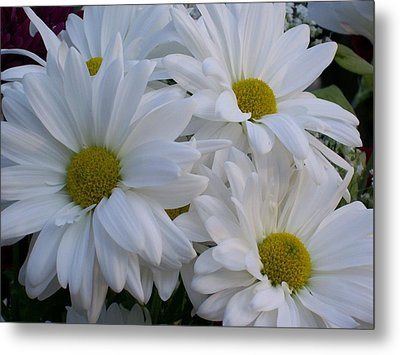 Daisy Bouquet Metal Print by Belinda Lee