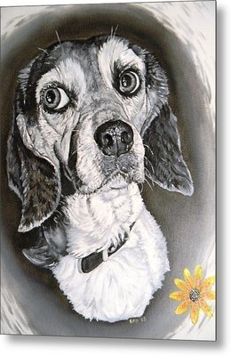 Daisy Dog Metal Print by Kevin F Heuman