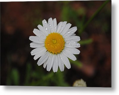 Metal Print featuring the photograph Daisy by Robert  Moss