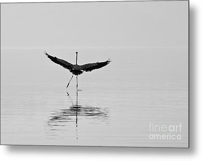 Dancing On The Water Metal Print by Jay Nodianos