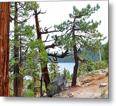Dancing Trees Metal Print by Lula Adams