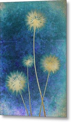 Dandelions Metal Print by Nicole Neuefeind