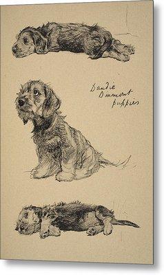 Dandie Dinmont Puppies, 1930 Metal Print by Cecil Charles Windsor Aldin