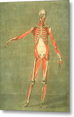 Deeper Muscular System Of The Front Metal Print by Arnauld Eloi Gautier D'Agoty