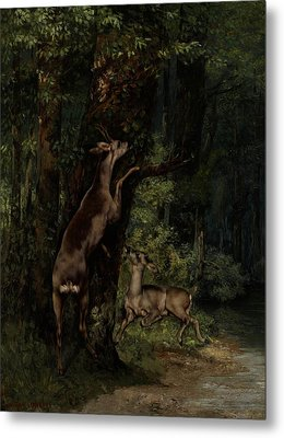 Deer In The Forest Metal Print by Gustave Courbet