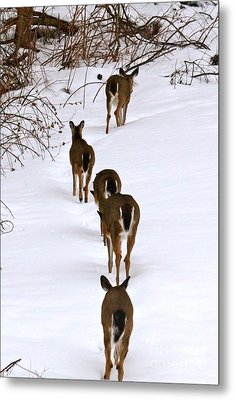 Deer Trail Metal Print by Jay Nodianos