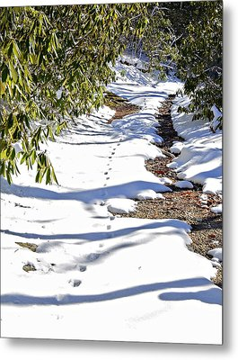 Deer Trail Metal Print by Susan Leggett