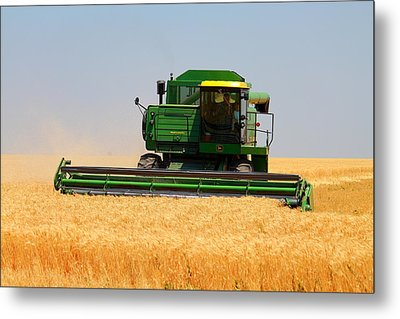 Deere Field Metal Print by Jason Drake
