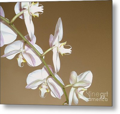 Metal Print featuring the photograph Delicate Display by Geri Glavis