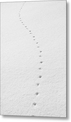 Delicate Tracks In The Snow Metal Print