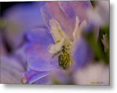 Metal Print featuring the photograph Delphinium by Kathy Ponce