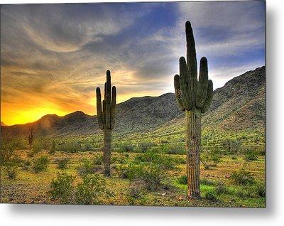 Desert Sunset Metal Print by Dan Myers