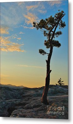 Metal Print featuring the photograph Determined by Paul Noble
