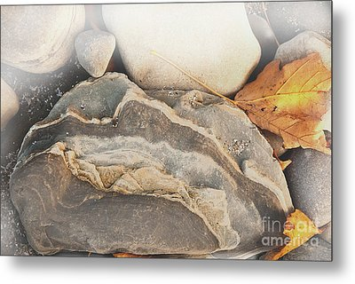 Metal Print featuring the photograph Discovered Beauty by Lena Wilhite