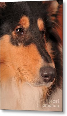 Metal Print featuring the photograph Dog Portrait by Randi Grace Nilsberg