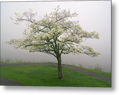 Dogwood And Fog With Bench - Abbott Lake - Peaks Of Otter Metal Print by Byron Spencer