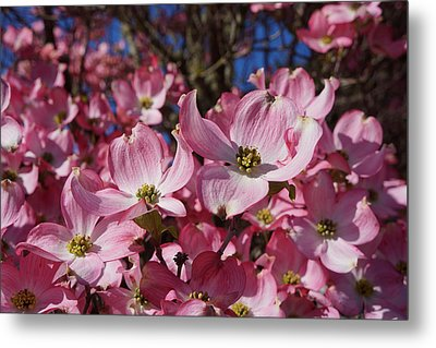 Dogwood Tree Flowers Art Prints Floral Metal Print by Baslee Troutman