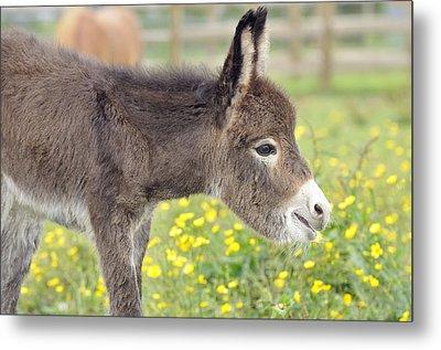 Donkey Baby Metal Print