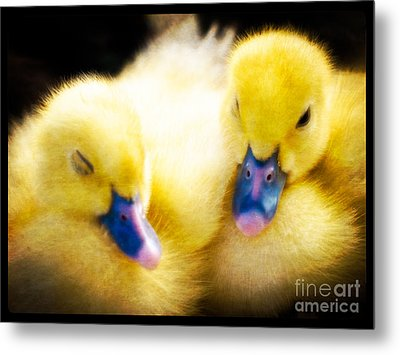 Downy Ducklings Metal Print by Edward Fielding