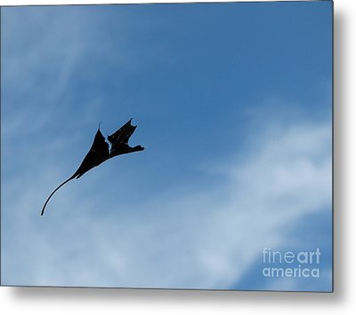 Metal Print featuring the photograph Dragon In Flight by Jane Ford