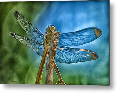 Metal Print featuring the photograph Dragonfly by Dennis Baswell