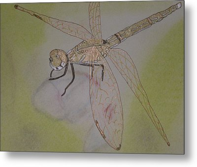 Dragonfly Visitor Metal Print by Marcia Weller-Wenbert